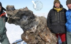Russian Scientists Discover Preserved Mammoth With Free-Flowing Blood