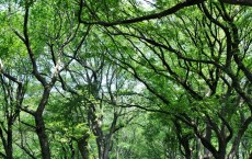 Elm Trees