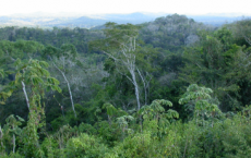 Rainforest in Belize