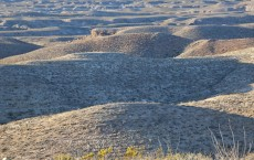 Prehistoric Trackways in New Mexico