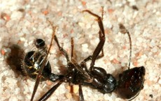 Tiny Spider Attacks Ant