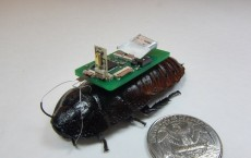 Cockroach Cyborg