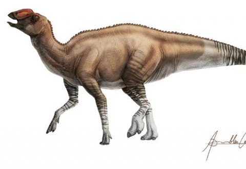Aquilarhinus Palimentus 2 (IMAGE)